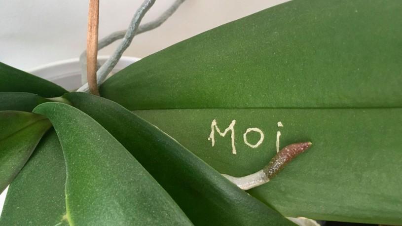 Chloé Lefebvre, Moi, de la série Je me suis remise à la gravure — me too, 2020, plante scarifiée